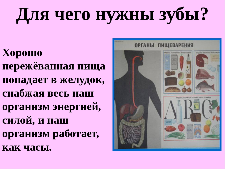 Хорошо пережёванная пища попадает в желудок, снабжая весь наш организм энерги...