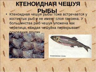 КТЕНОИДНАЯ ЧЕШУЯ РЫБЫ Ктеноидная чешуя рыбы тоже встречается у костистых рыб