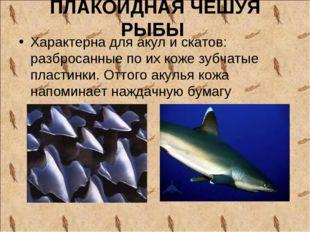ПЛАКОИДНАЯ ЧЕШУЯ РЫБЫ Характерна для акул и скатов: разбросанные по их коже з