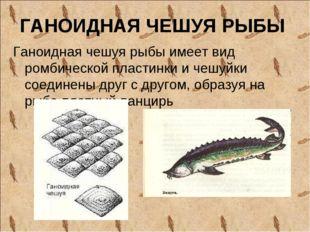 ГАНОИДНАЯ ЧЕШУЯ РЫБЫ Ганоидная чешуя рыбы имеет вид ромбической пластинки и