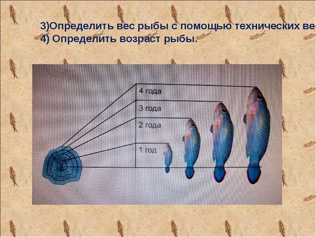 3)Определить вес рыбы с помощью технических весов 4) Определить возраст рыбы.