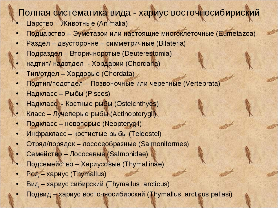 Полная систематика вида - хариус восточносибириский Царство – Животные (Anima...