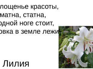 Воплощенье красоты, Ароматна, статна, На одной ноге стоит, Луковка в земле ле
