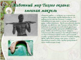 Животный мир Тихого океана: змеиная макрель «Летучая рыба»,— подумал он и п
