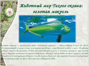Животный мир Тихого океана: золотая макрель Золотая макрель — тропическая ры