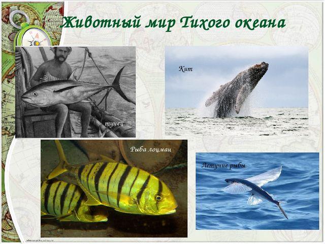Животный мир Тихого океана тунец Рыба лоцман Кит Летучие рыбы
