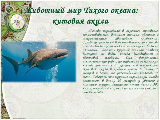 Животный мир Тихого океана: китовая акула «Голова переходила в огромное туло...