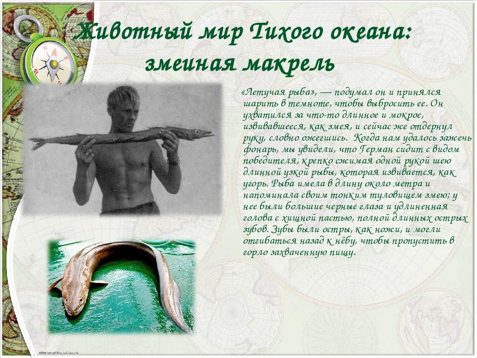 Животный мир Тихого океана: змеиная макрель «Летучая рыба»,— подумал он и п...