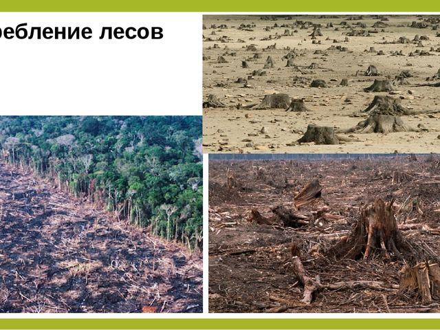 Истребление лесов