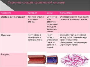 Строение сосудов кровеносной системы Название Артерии Вены Капилляры Особенно