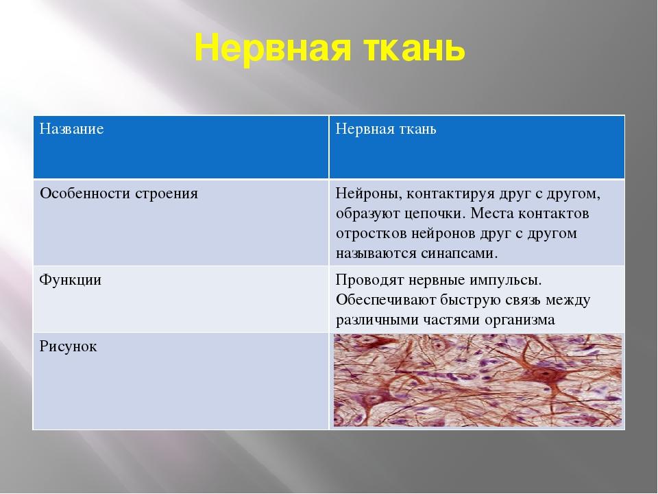 Нервная ткань Название Нервнаяткань Особенности строения Нейроны,контактируя...