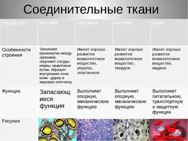 Соединительные ткани Название жировая хрящевая костная кровь Особенности стро...