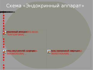 Схема «Эндокринный аппарат»
