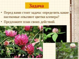 Задача Перед вами стоит задача: определить какие насекомые опыляют цветки кле