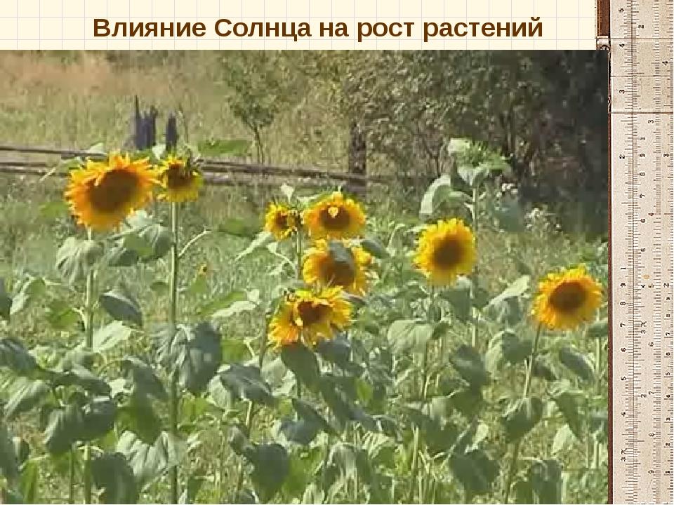 Влияние Солнца на рост растений