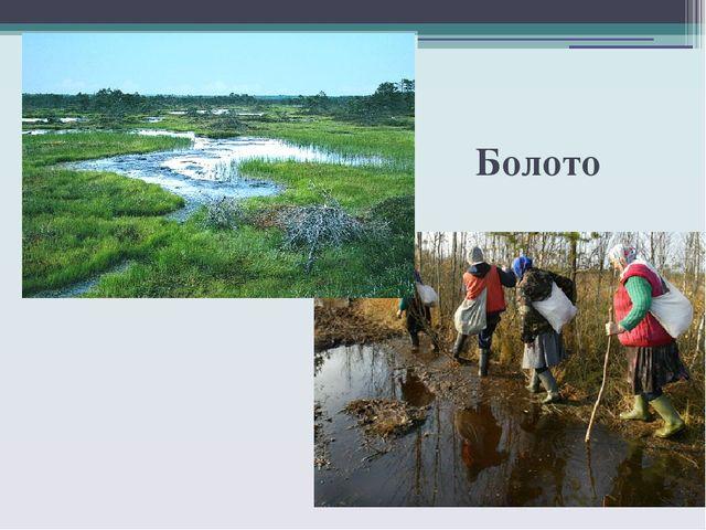 Животные болота