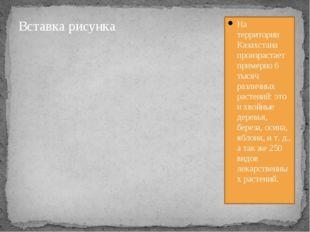 На территории Казахстана произрастает примерно 6 тысяч различных растений: э