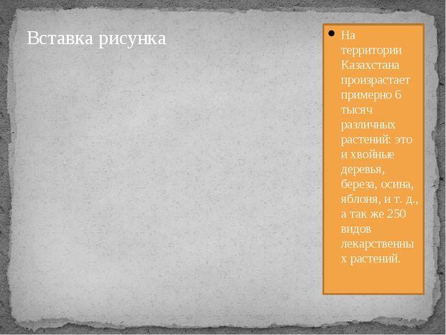 На территории Казахстана произрастает примерно 6 тысяч различных растений: э...