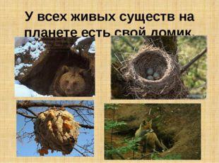 У всех живых существ на планете есть свой домик.