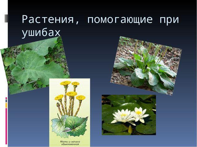 Растения, помогающие при ушибах