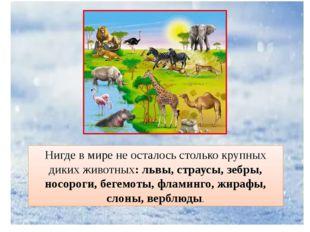 Нигде в мире не осталось столько крупных диких животных: львы, страусы, зебры