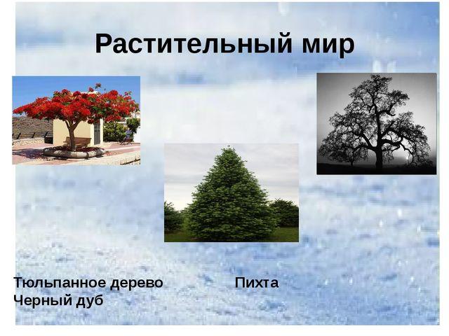 Растительный мир Тюльпанное дерево Пихта Черный дуб