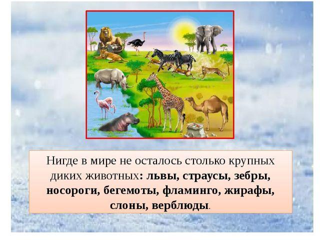 Нигде в мире не осталось столько крупных диких животных: львы, страусы, зебры...
