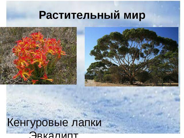 Растительный мир Кенгуровые лапки Эвкалипт
