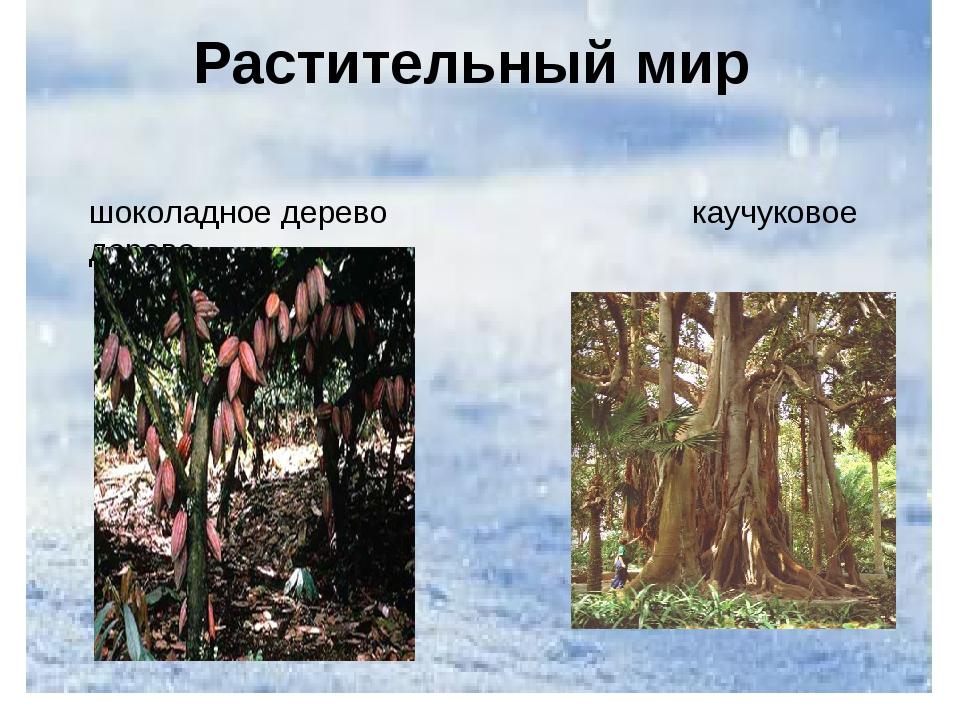 Растительный мир шоколадное дерево каучуковое дерево