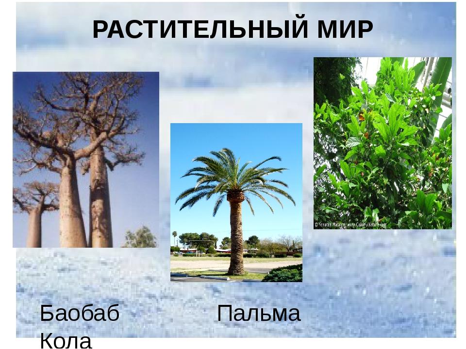 Баобаб Пальма Кола РАСТИТЕЛЬНЫЙ МИР