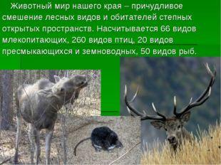 Животный мир нашего края – причудливое смешение лесных видов и обитателей ст
