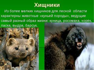 Хищники Из более мелких хищников для лесной области характерны животные «кун