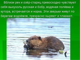 Вблизи рек и озёр-стариц превосходно чувствуют себя выхухоль русская и бобр,