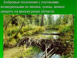 Бобровые поселения с плотинами, возведёнными из ивняка, осины, можно увидеть