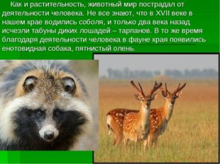 Как и растительность, животный мир пострадал от деятельности человека. Не вс