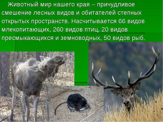 Животный мир нашего края – причудливое смешение лесных видов и обитателей ст...