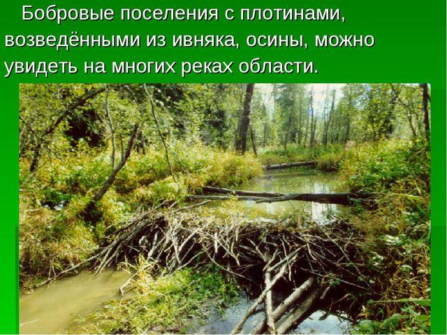 Бобровые поселения с плотинами, возведёнными из ивняка, осины, можно увидеть...