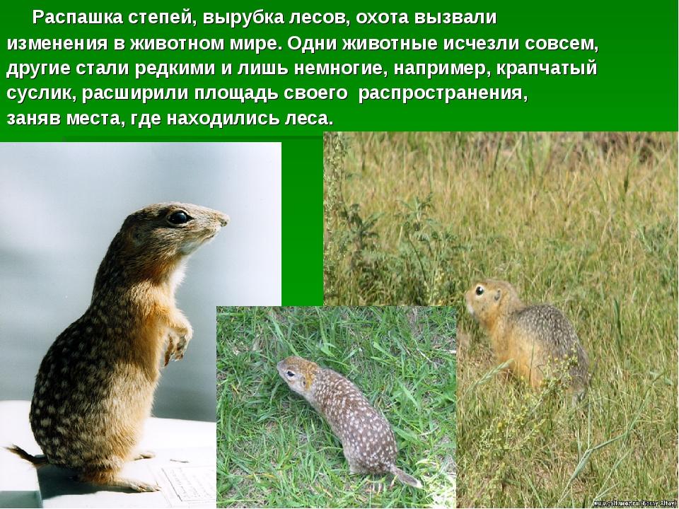 Распашка степей, вырубка лесов, охота вызвали изменения в животном мире. Одн...
