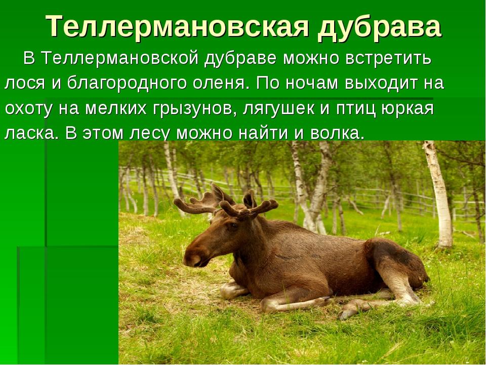 Теллермановская дубрава В Теллермановской дубраве можно встретить лося и бла...