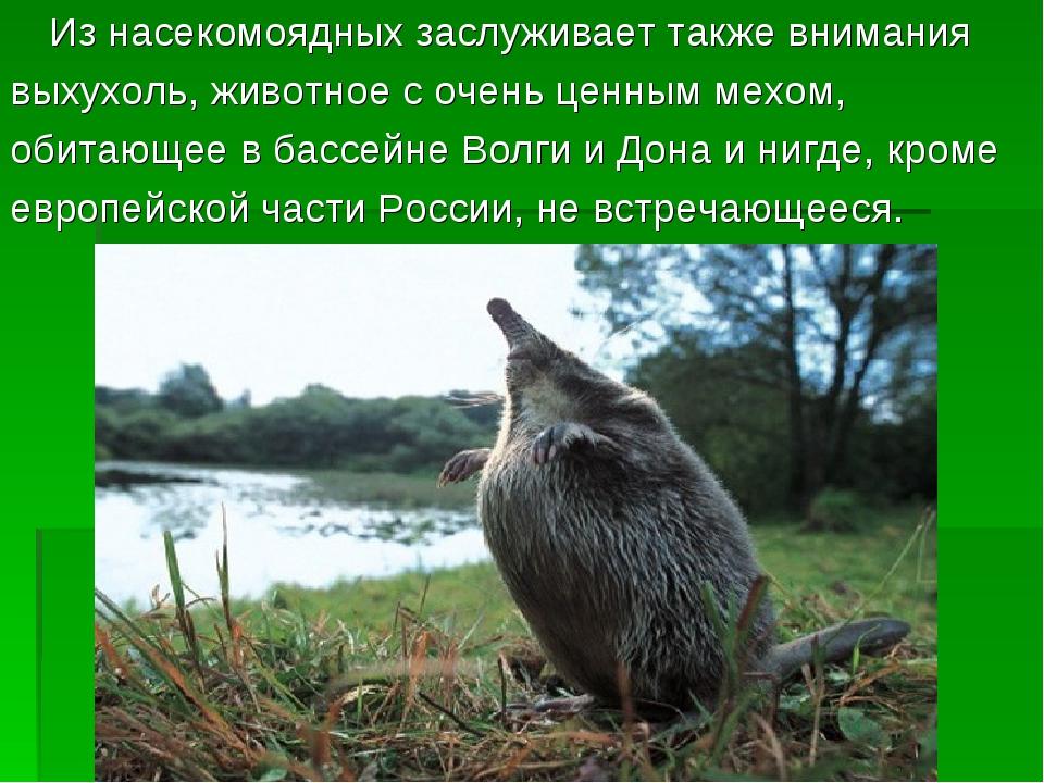 Из насекомоядных заслуживает также внимания выхухоль, животное с очень ценны...