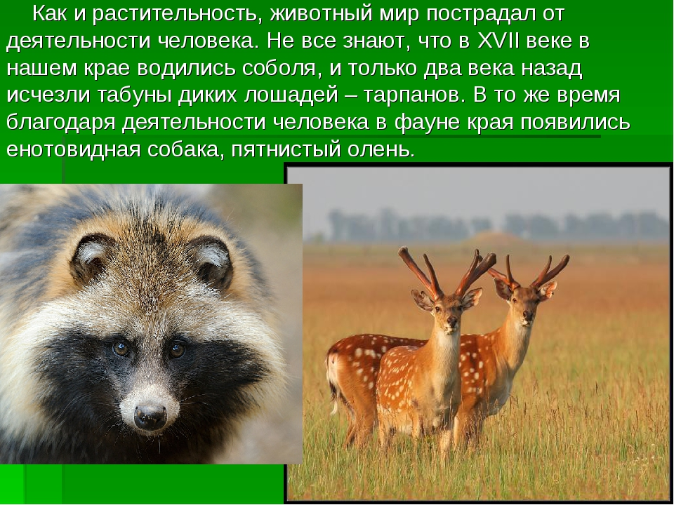 Как и растительность, животный мир пострадал от деятельности человека. Не вс...
