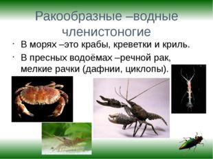 Ракообразные –водные членистоногие В морях –это крабы, креветки и криль. В пр