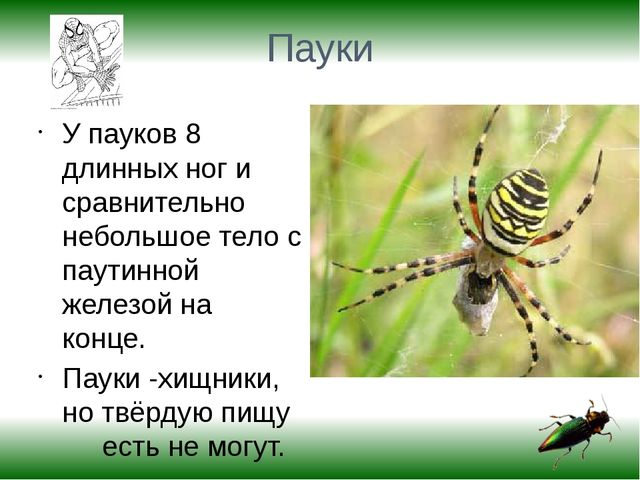 Пауки У пауков 8 длинных ног и сравнительно небольшое тело с паутинной железо...