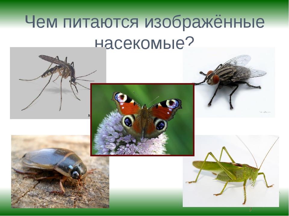 Чем питаются изображённые насекомые?