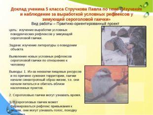 Доклад ученика 5 класса Стручкова Павла по теме «Изучение и наблюдение за выр