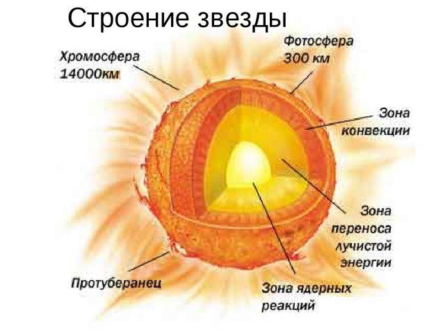 Строение звезды Ядро - это центральная область звезды, в которой идут ядерные...