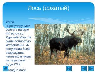 Животный мир Курской области Исследовательская презентация для начальных клас