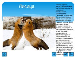 Лисица Лисицы хорошо приспособлены к жизни и в лесу и в безлесной местности.