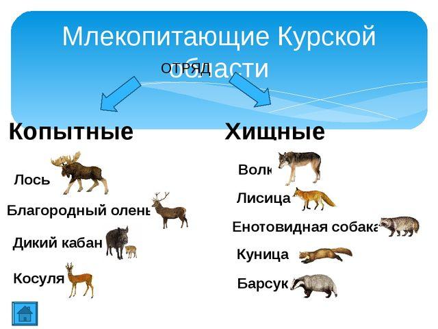 Благородный олень Олень всегда был желанным объектом охоты, дающим человеку м...