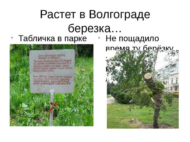 Растет в Волгограде березка… Табличка в парке в память о березке Не пощадило...